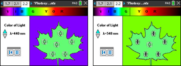 Screenshots from the Photosynthesis in Plants activity