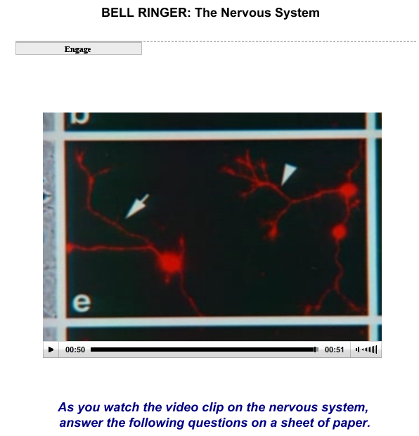 The Nervous System SS